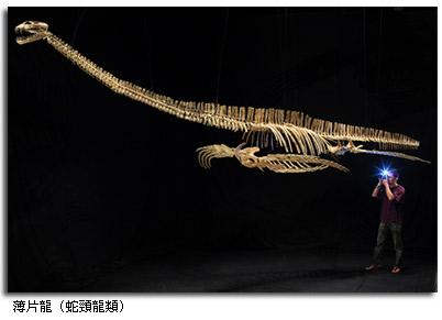 蛇颈龙中长颈,短尾,娇小脑袋的类